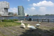 Almere Spartamet Swans