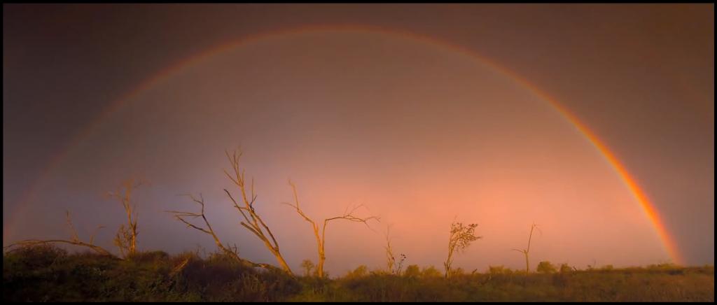 Oostvaardersplassen Rainbow